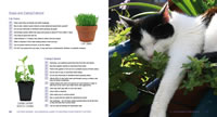 Cat grass and catmint
